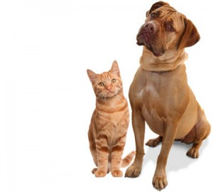 pets; relationship therapy
